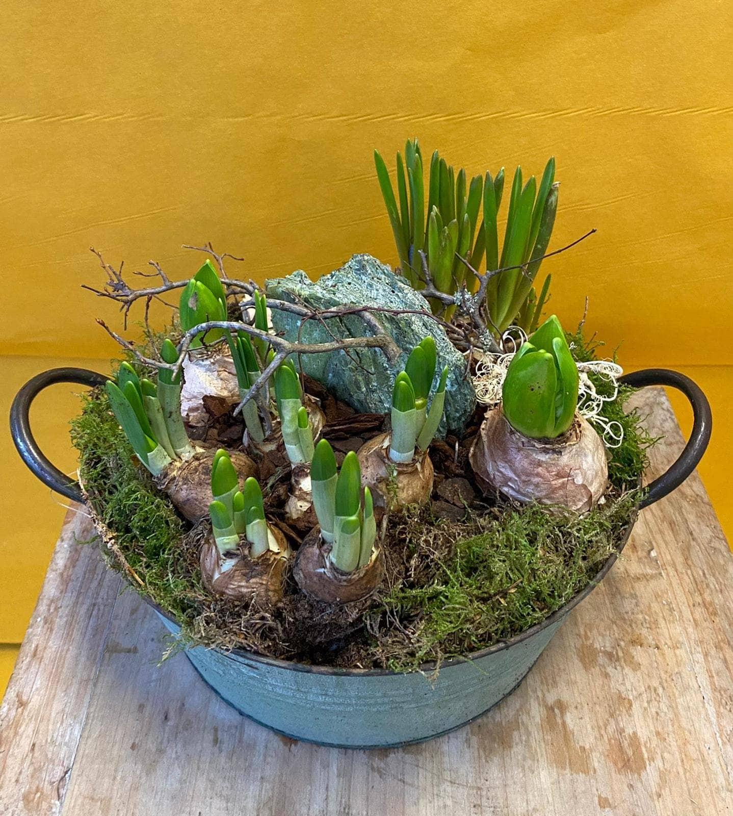 Bild Pflanzenkorb